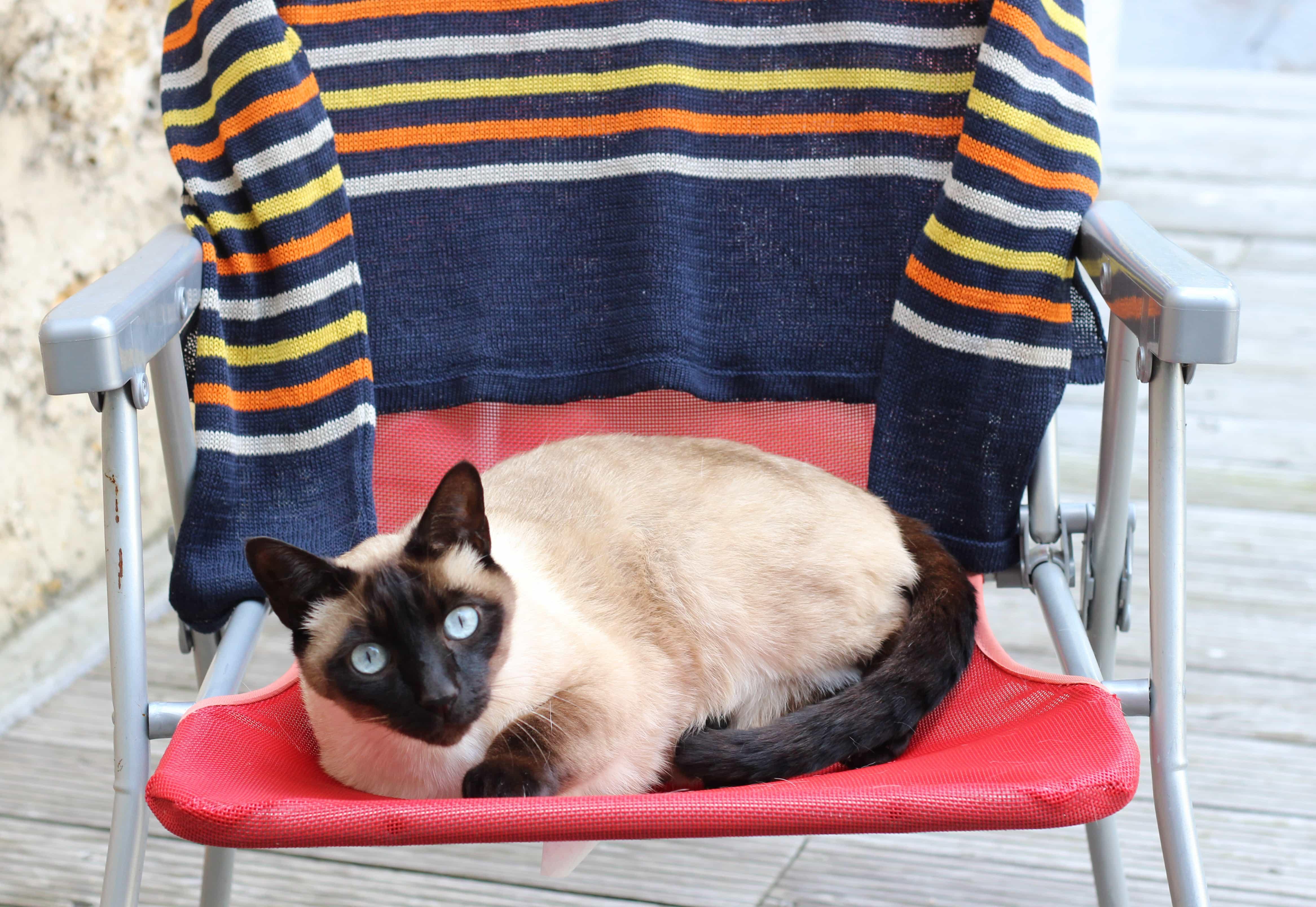 chat marinière